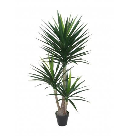POTTED 160CM YUCCA