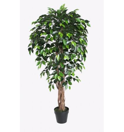 POTTED 150CM FICUS