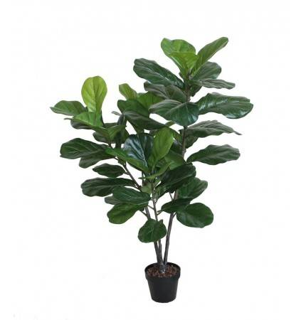 POTTED 120CM FIDDLE TREE