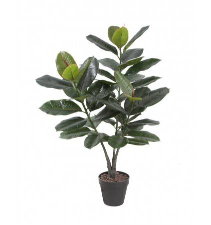 POTTED 90CM RUBBER PLANT