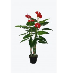 POTTED 110CM ANTHURIUM